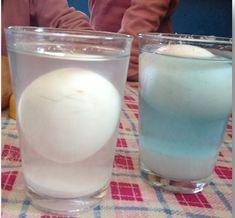 yüzen yumurta deneyi fen etkinliği