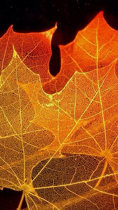 Leaf skeletons