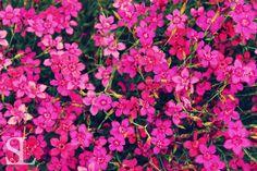 Sommergefühle - Blütenmeer
