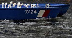 Cisnes están atrapados en un barco después de ser detenidos desde un lago interior de Hamburgo.