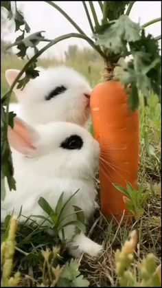 Cute Baby Bunnies, Baby Animals Super Cute, Cute Wild Animals, Baby Animals Pictures, Cute Baby Dogs, Cute Little Animals, Cute Animal Pictures, Cute Funny Animals, Animals Beautiful