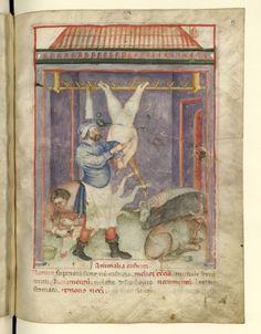 Nouvelle acquisition latine 1673, fol. 65, Marchand de viandes variées. Tacuinum sanitatis, Milano or Pavie (Italy), 1390-1400.