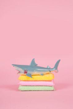 art direction | shark toy still life photography