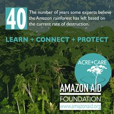 40: the number of years some experts believe the Amazon rainforest has left based on the current rate of destruction