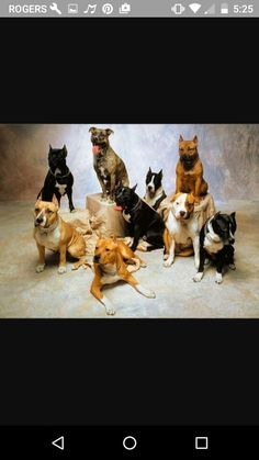 It's a family of dogs so cute