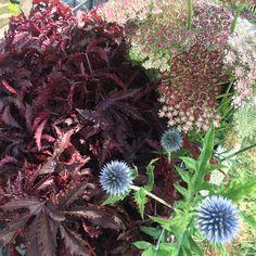 July Flowers, Summer Special, Warm Weather, Special Events, Instagram Posts, Plants, Garden, Garten, Planters