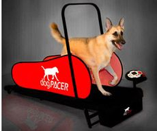 Dog Pacer Electronic Folding Dog Treadmills - Mighty Mite Dog Gear. I have a human treadmill, but this would be so much easier. Love the bar in the middle (so they can't fall off or jump forward). And it folds up smaller!!