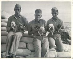 "1944- U.S. Marine dog trainers at a Pacific base shown holding six new ""recruits"" who will be trained for guard duty."