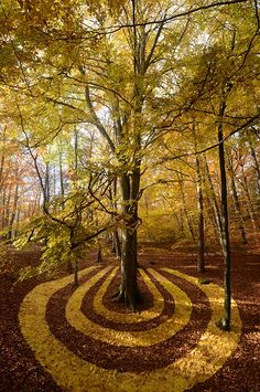 "♂ Environmental art land art Nature art ""L'aimant d'Erable"" by Sylvain Meyer"