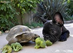 You can have it, Mr. Turtle....I don't even like broccoli.