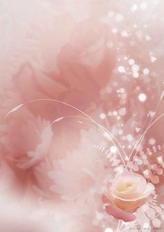 Sparkling White Rose Paper.