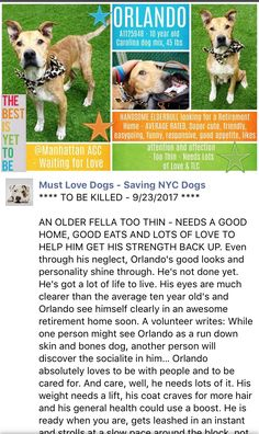 ❤️❤️❤️ HAPPYTEARS ❤️❤️ SAFE❤️❤️ 9/24/17 BY SECOND CHANCE RESCUE❤️ THANK YOU❤️ /ijSUPER URGENT Manhattan Center ORLANDO – A1125948 **SAFER : AVERAGE HOME** MALE, TAN, CAROLINA DOG MIX, 10 yrs STRAY – STRAY WAIT, NO HOLD Reason STRAY Intake condition GERIATRIC Intake Date 09/18/2017, From NY 10467, DueOut Date 09/21/2017, Medical Behavior Evaluation GREEN http://nycdogs.urgentpodr.org/orlando-a1125948/