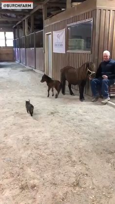 Video: News 4 San Antonio You are in the right place about Cutest Baby Animals so cute Here w Cute Funny Animals, Cute Baby Animals, Animals And Pets, Funny Cats, Nature Animals, Wild Animals, Cute Animal Videos, Funny Animal Pictures, Beautiful Horses