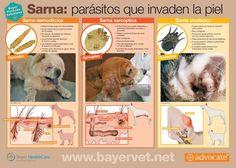 Sarna - CV ALBEITAR/veterinarios en telde/clinica veterinaria en Telde/clínica veterinaria albeitar/veterinarios en Las Palmas/albeitar