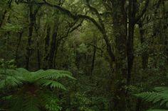 Temperate Rainforest, New Zealand