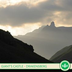 Giant's Castle is home to some of the best preserved ancient rock art! Honeymoon Places, Places Of Interest, My Land, Rock Art, Need To Know, South Africa, Tourism, Scenery, Wildlife