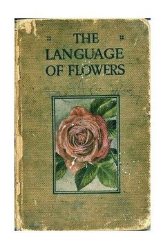 floralls via Garden Design Collections Online Bullet Journal, Last Exile, The Garden Of Words, Yennefer Of Vengerberg, Language Of Flowers, Png Icons, Conte, App Icon, Mood Boards