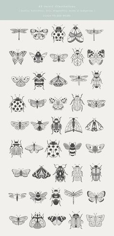 Beetles, Bugs & Butterflies is a collection of 45 hand-drawn & vectorised insect illustrations. Each illustration is provided as an outline/line-drawing, with Illustration Papillon, Butterfly Illustration, Plant Illustration, Outline Illustration, Black And White Illustration, Mini Tattoos, Small Tattoos, Art Sketches, Art Drawings