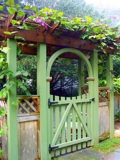 Hyacinth bean vine - black & white seeds growing over the arbor gate