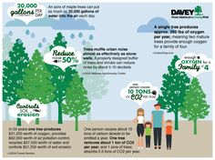 #Trees benefit our environment in oh-so-many ways! #TREEmendous