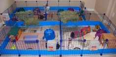 A magnificent home for your guinea pigs... except for the fact my cats/dogs would promptly jump inside!