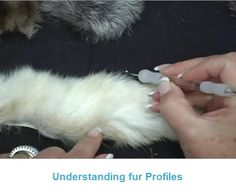 Painting Animal Fur - What to Look For - Art Apprentice Online Wolf Painting, Image Painting, Acrylic Painting Techniques, Learn Art, Learn To Paint, Learn Painting, Animal Paintings, Animal Drawings, Oil Pastel Techniques