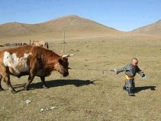 'Bout the right size for an oosa (Mongolia)