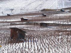 Leytron, Valais (CH), February 2013 Swiss Switzerland, Railroad Tracks, Vineyard, February, Pictures, Grape Vines, Wine, Photos, Vine Yard
