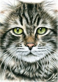 "Nicole Zeug; Drawing, ""Cats Face"""