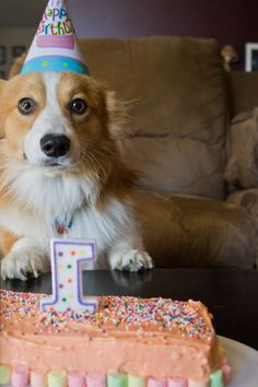 Natalie- a friendly reminder to have a party for your Corgi!