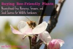 A comprehensive list of neonicotinoid-free nurseries, plant growers, and seed sources for creating a bee-friendly garden.
