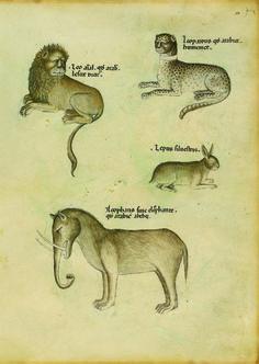 Conheça a editora que cria cópias perfeitas de renomados manuscritos medievais e renascentistas - Literatortura