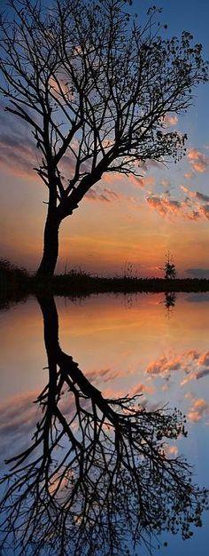 sunset tree reflection #via: 500px.com --  Sarawut Intarob