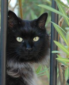 Arthur, ma #PerleNoire adoptée à 4 ans au refuge du chat libre de Marseille.