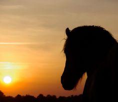 nature religion tumblr | Sunset | Horses | Pinterest