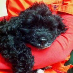 Cuteness!  I really really want a puppy!