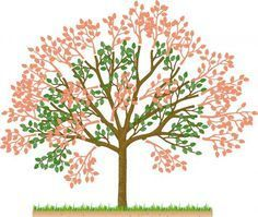 Prune cherry trees in summer- Kirschbäume im Sommer schneiden Cherry tree more - Backyard Plants, Landscaping Plants, Garden Plants, Bonsai Garden, Garden Trees, Herb Garden, Summer Trees, Tree Pruning, Miniature Trees