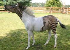 Výsledek obrázku pro kůň