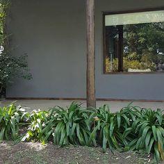 Plants, Color, Instagram, Cottage, Courtyards, House Decorations, Gardens, Houses, Plant