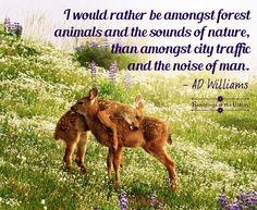 """Image result for """"I would rather be amongst forest animals and the sounds of nature, than amongst city traffic and the noise of man."""""""
