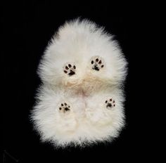Underlook includes all the projects with photos of pets / animals from underneath. It is made by a Lithuanian photographer Andrius Burba.