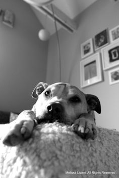 StubbyDog: Laura's blog - landlord adopts to pit bulls.  Positive rethinking on renting to dog owners.