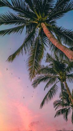- very nice stuff - share it - 50 Trendy flowers photography summer tropical Strand Wallpaper, Ocean Wallpaper, Tree Wallpaper, Iphone Background Wallpaper, Aesthetic Iphone Wallpaper, Nature Wallpaper, Cool Wallpaper, Aesthetic Wallpapers, Iphone Wallpaper Summer