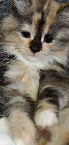 Kittens Cutest Baby, Cute Baby Cats, Cute Cats And Kittens, Cute Baby Animals, Pretty Cats, Beautiful Cats, Animals Beautiful, Ugly Cat, Whiskers On Kittens