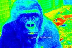 King Kong Ape Silver back Gorilla Decorative  Wall by moviemania