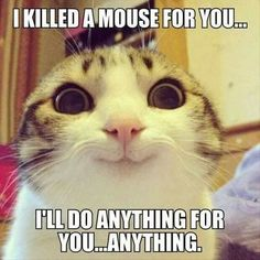 Der Job einer Katze ist nicht getan, wenn du nicht zu früh aufwachst und sofort in Katzenstreu trittst.