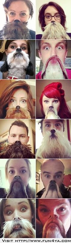 "Heard of dog Bearding?"" Well, now's there is ""Dog Bearding"" this is awesome lol Funny Cat Faces, Funny Dogs, Funny Animals, Cute Animals, Haha Funny, Funny Cute, Hilarious, Funny Shit, Funny Stuff"