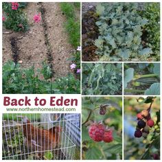 1000 Images About Back To Eden Mulching On Pinterest Eden Gardens Back To And Mulches