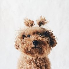 Super cute! #dog #pup #sourceunknown Could I buy this? I love it! #outfit #Ootd #fashion #style #howtochic