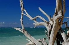 How to clean driftwood. Driftwood has distinctive wear patterns and a bleached appearance.